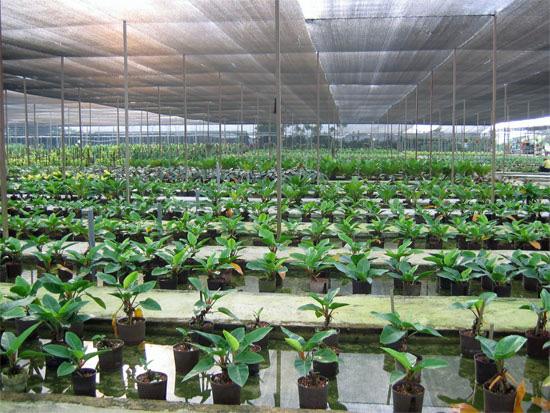 Kiat Lee Landscape Services Nursery